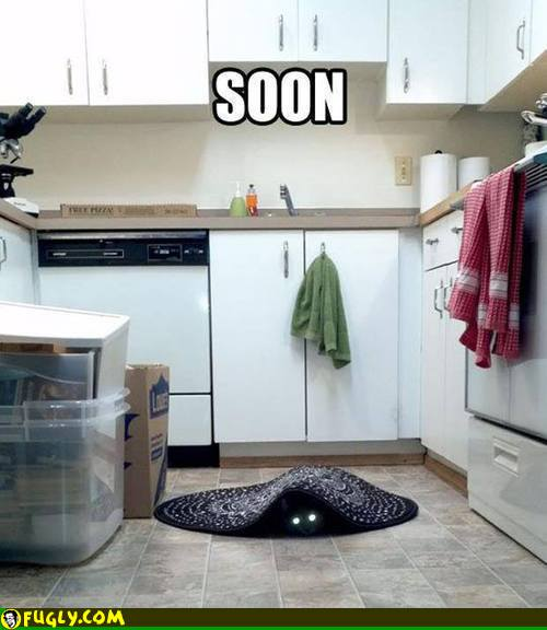 scary_kitchen_cat