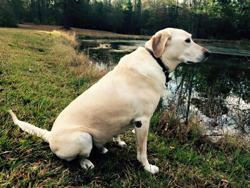 ranger at the pond